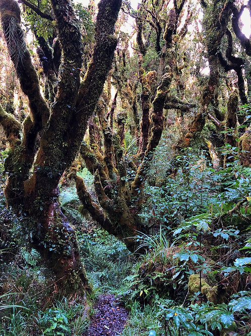 Enchanted Forest - New Zealand by Molly Cusick