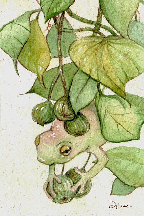 Houdini Frog by Jime Wimmer