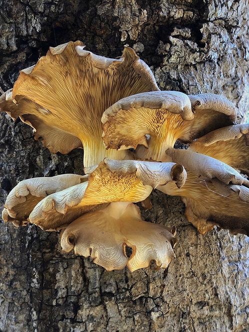 Mushroom and Tree by Molly Cusick