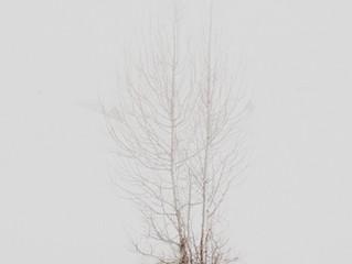 木を見て森を見た気になっている???