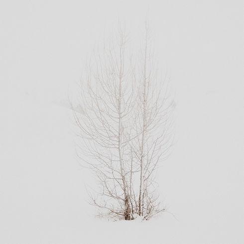Les arbres en hiver