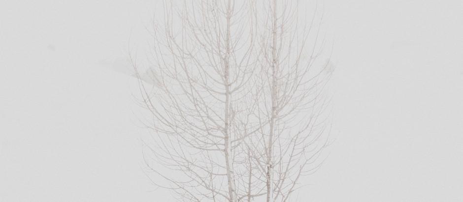 Should we plant trees on Tu B'Shevat?