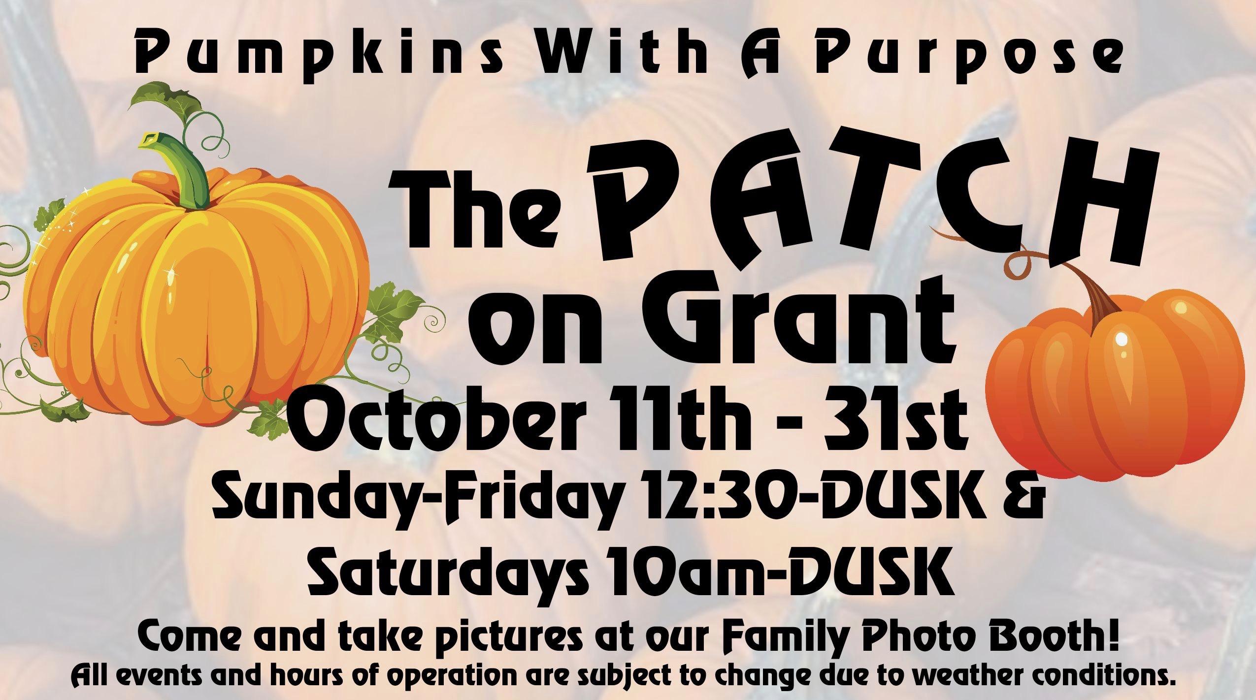 pumpkin patch 2-001 copy