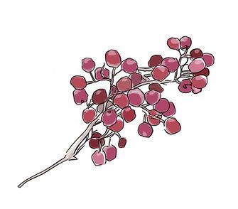 pinkpepper.jpg