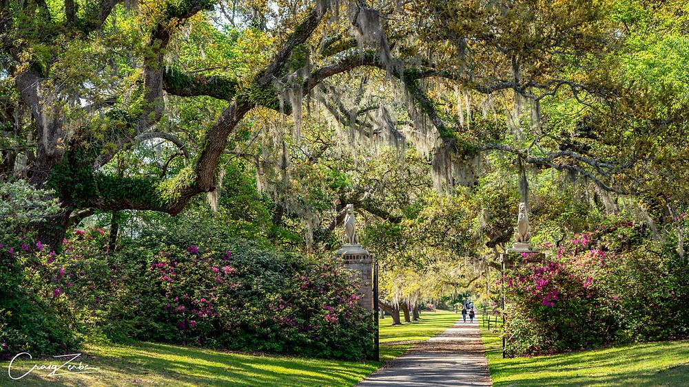 Brookgreen Gardens  South Carolina - Azalea - Photo Guide - Myrtle Beach