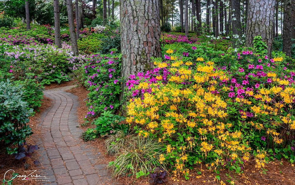 WRAL Azalea Garden - Raleigh North Carolina - blooming - Photo guide