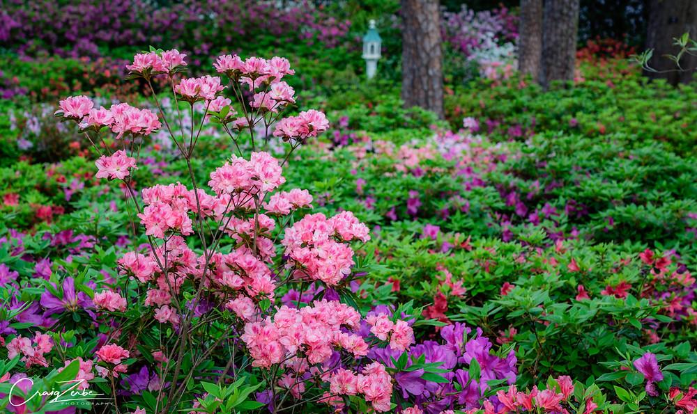 Azalea Garden - Photo Workshop