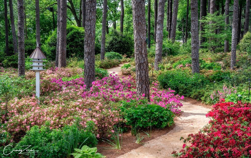 Azalea Garden in Raleigh North Carolina - Photo workshop