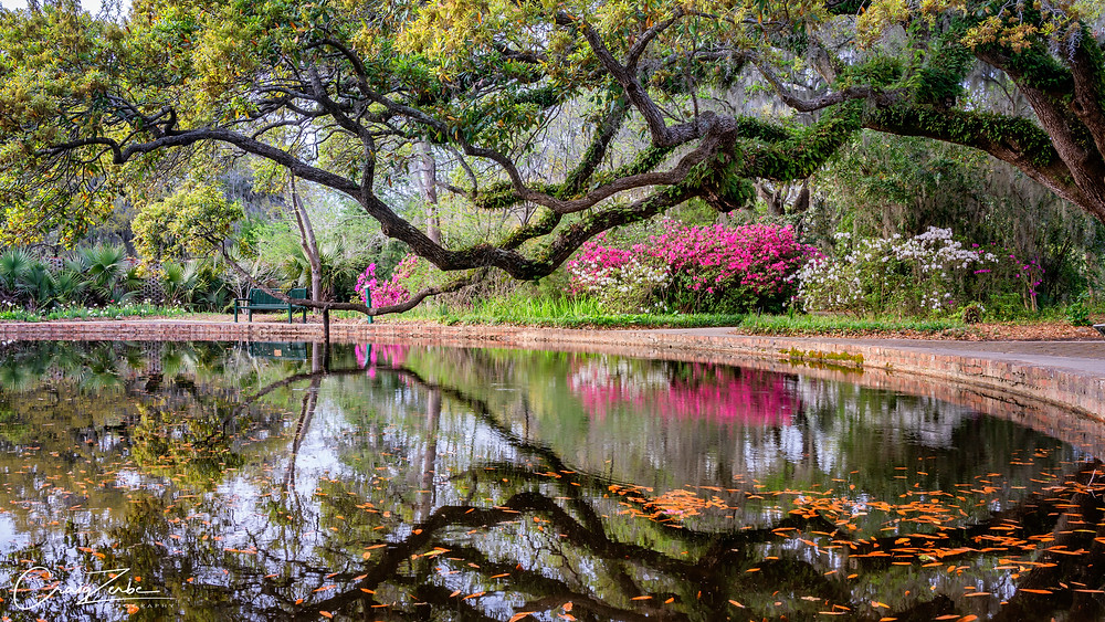 Brookgreen Gardens - South Carolina - Live Oaks - Azalea - Photo Workshop