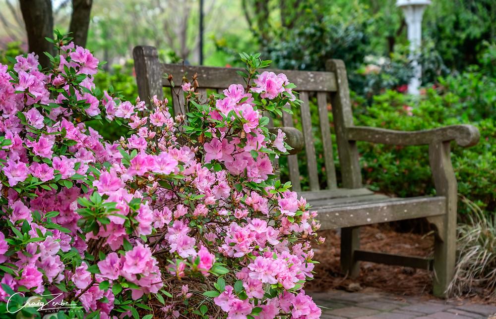 North Carolina Azaleas Garden Path Bench