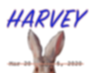Harvey 500x400.fw.png