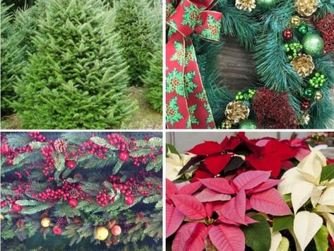 Make Your Holiday Memories at Goffle Brook Farm