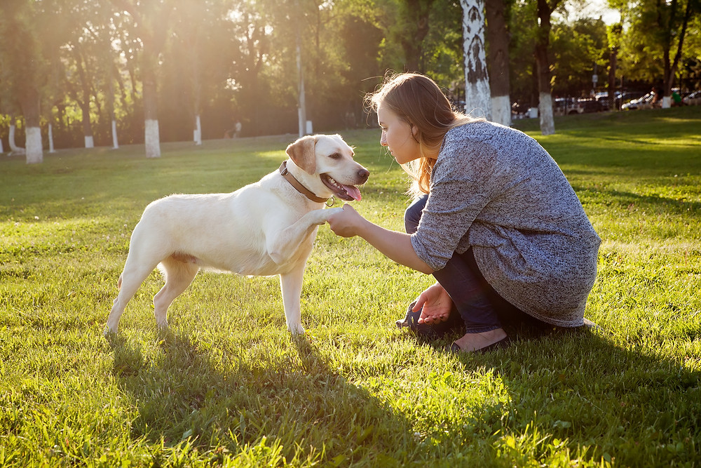 Getting Your Dog to Look at You by Dorice Stancher, MBA, CPDT-KA, Ridgewood Moms