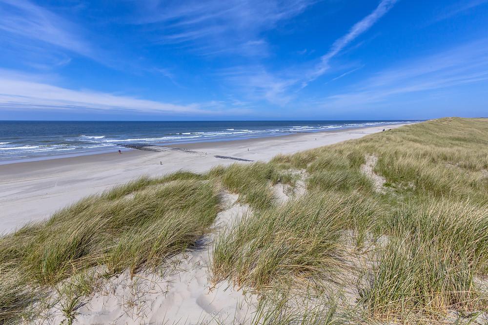 Plant Dune Grass at Island Beach State Park, Ridgewood Moms
