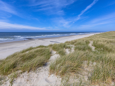 Plant Dune Grass at Island Beach State Park