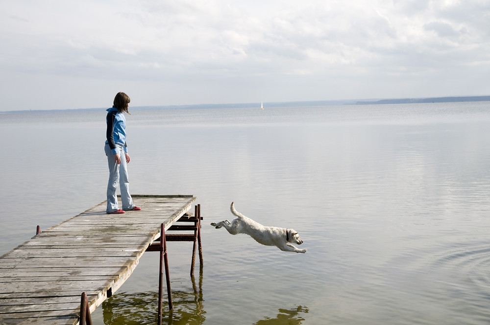 Dock Diving is Wet, Wild and Wonderful by Dorice Stancher, MBA, CPDT-KA, Bergen County Moms