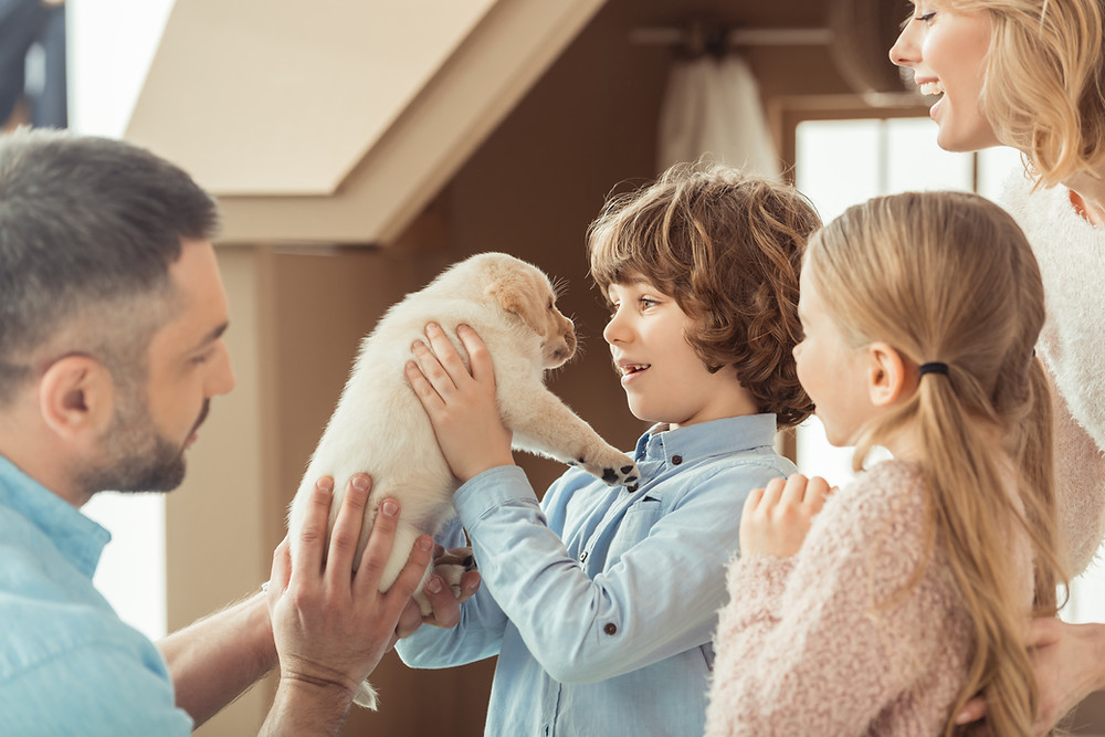 Training Your Dog is a Family Affair by Dorice Stancher, Bergen County Moms