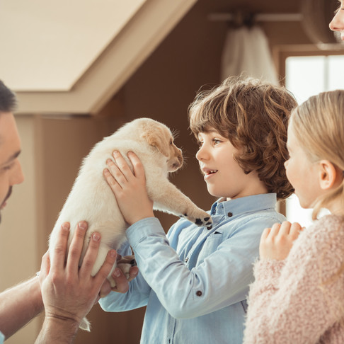 Training Your Dog is a Family Affair by Dorice Stancher, MBA, CPDT-KA