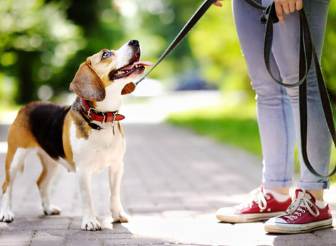 Teach Your Dog to Walk Nicely on aLeash by Dorice Stancher, MBA, CPDT-KA