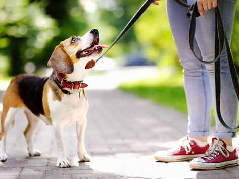 Teach Your Dog to Walk Nicely on a Leash by Dorice Stancher, MBA, CPDT-KA