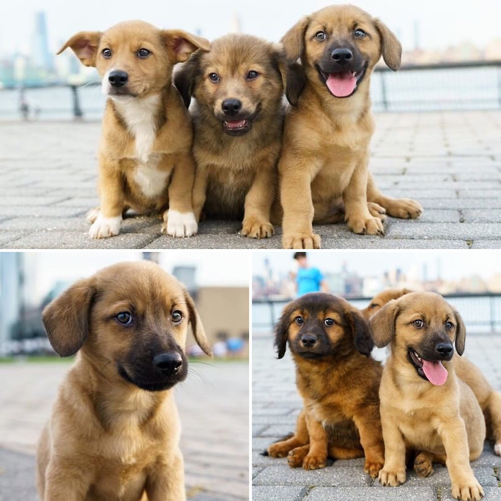 East Coast Canine Rescue Adoption June 30th, Bergen County Moms
