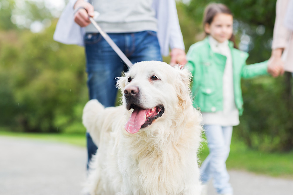 "Real Estate and ""The Dog Test"" by Dorice Stancher, MBA, CPDT-KA, Ridgewood Moms"