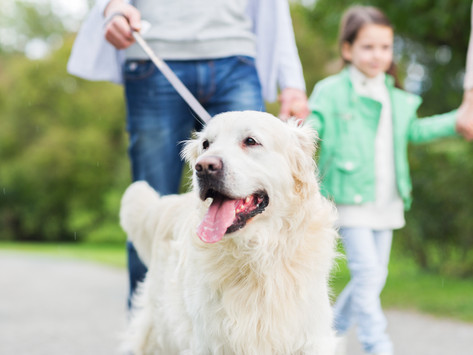 """Real Estate and """"The Dog Test"""" by Dorice Stancher, MBA, CPDT-KA"""