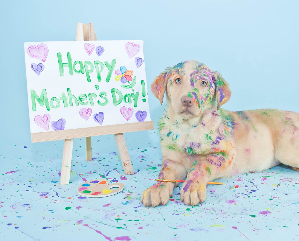 Need a Break? Doggie Day Care at The Madison Dog Resort & Spa, Bergen County Moms