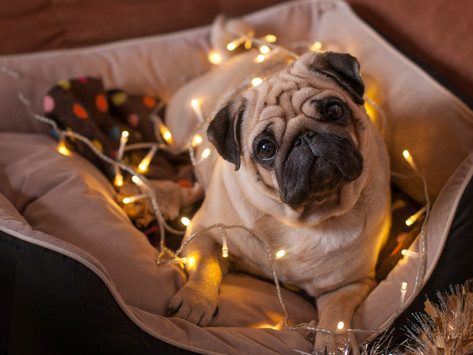 How to Keep Your Dog Safe During the Holidays by Dorice Stancher, MBA, CPDT-KA
