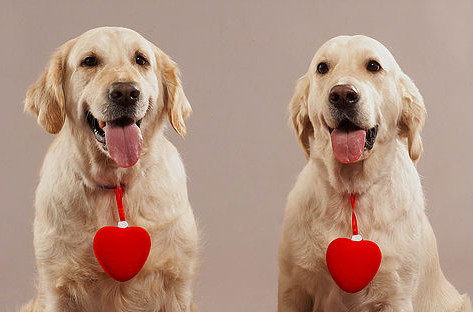 Doggie Day Care at the Madison Dog Resort & Spa
