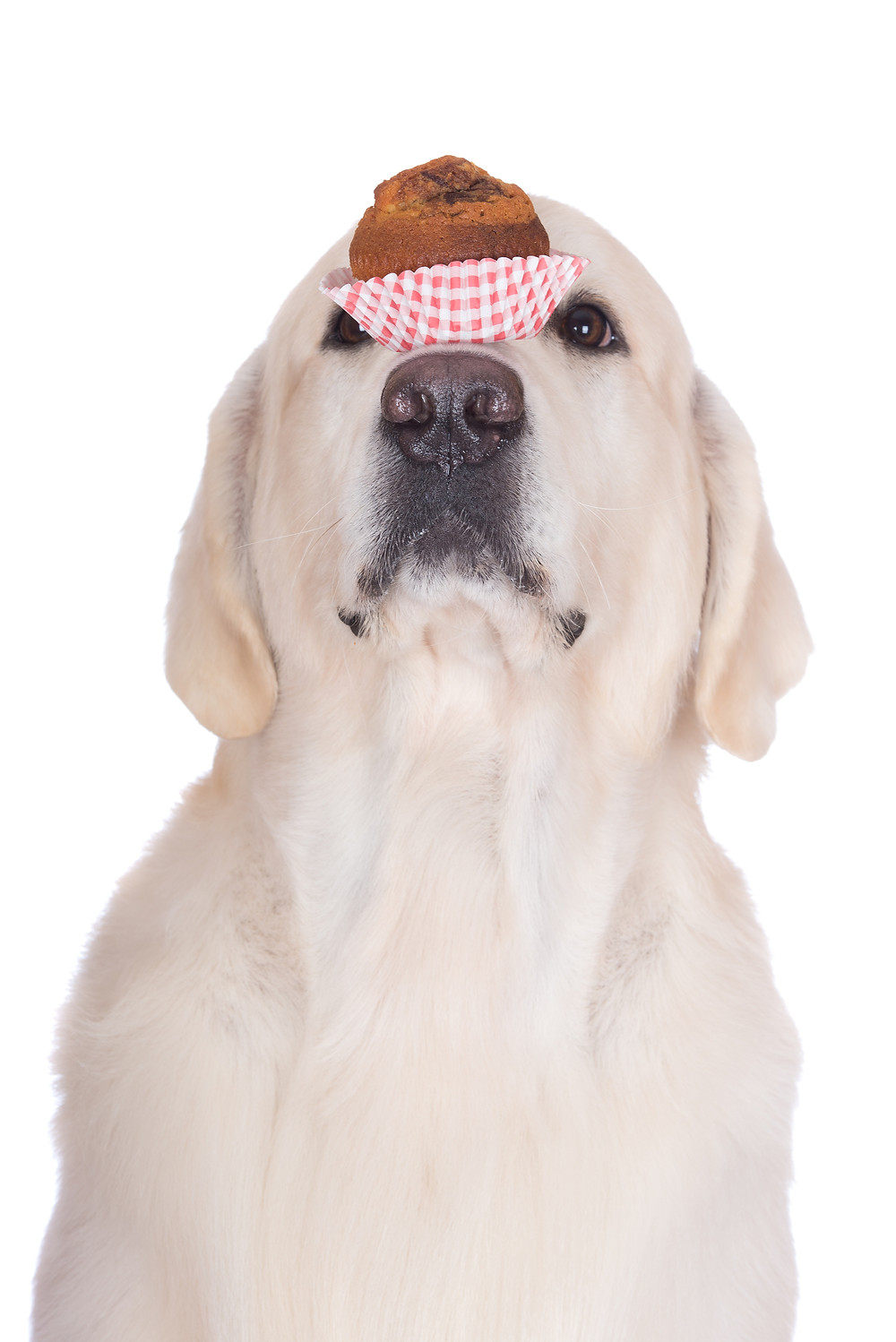 Dog Tricks are the Key to Getting Your Kids Involved in Training by Dorice Stancher, Bergen County Moms