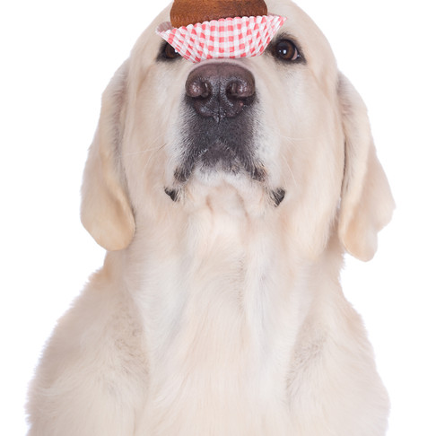 Dog Tricks are the Key to Getting Your Kids Involved in Training by Dorice Stancher, MBA,CPDT-KA