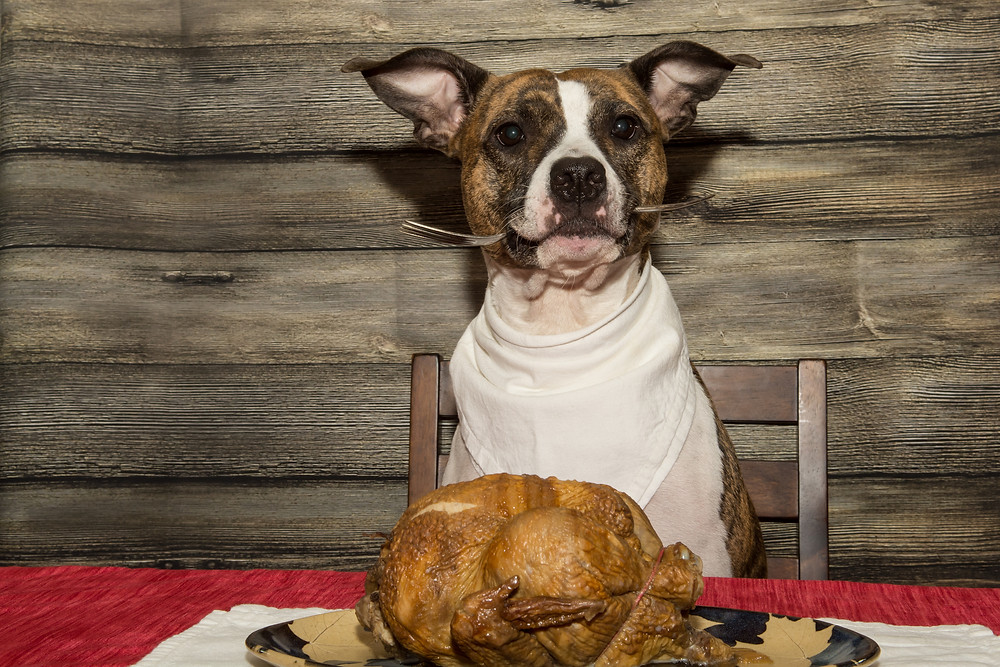 Thanksgiving Survival Guide by Dorice Stancher, MBA, CPDT-KA, Bergen County Dogs