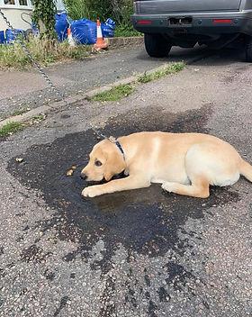 jay puddle.jpg