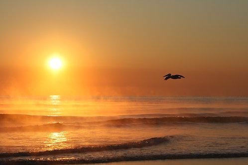 Pelican sunrise I Byron Bay I Print