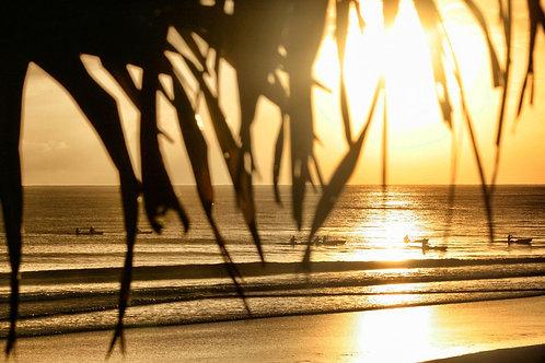 Pandanus sunrise I Byron Bay I Print