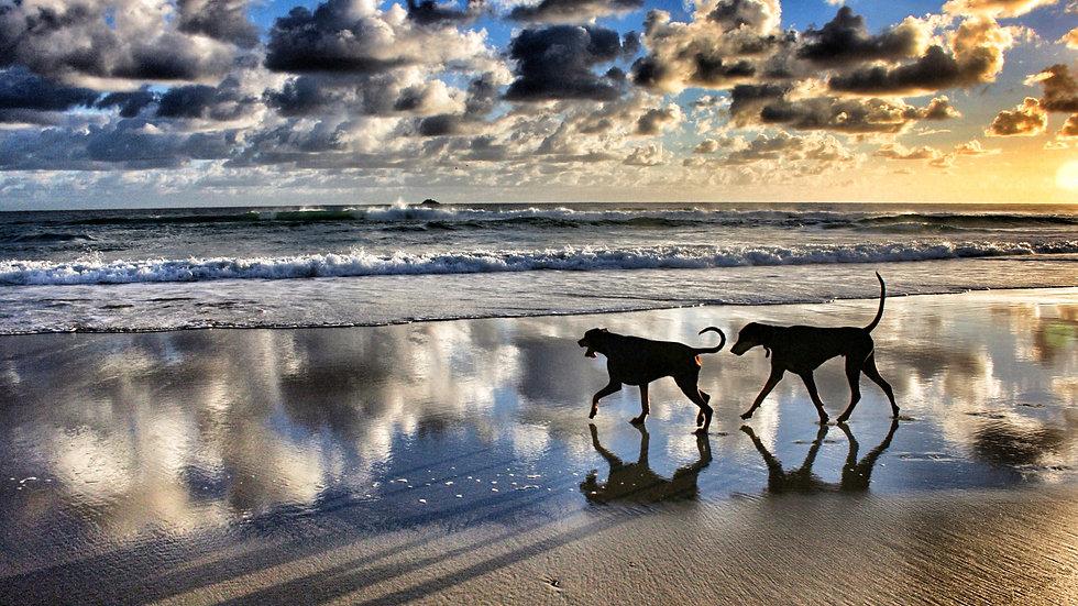 Byron Dogs I Byron Bay I Print