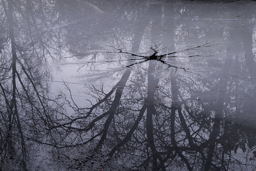 Naimul Karim Naim personal website photgraphy backyard tree reflection frozen pond misty cold winter