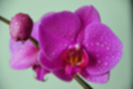 Naimul Karim Naim personal website photgraphy water drop on petal purple flower close-up