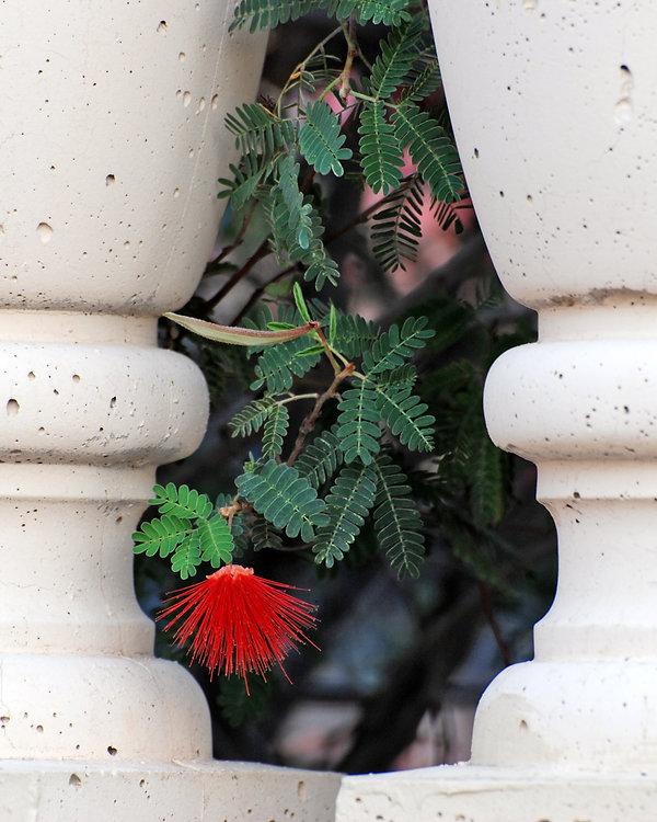 Naimul Karim Naim personal website photography  Arizona balustrade flower vsase inverse