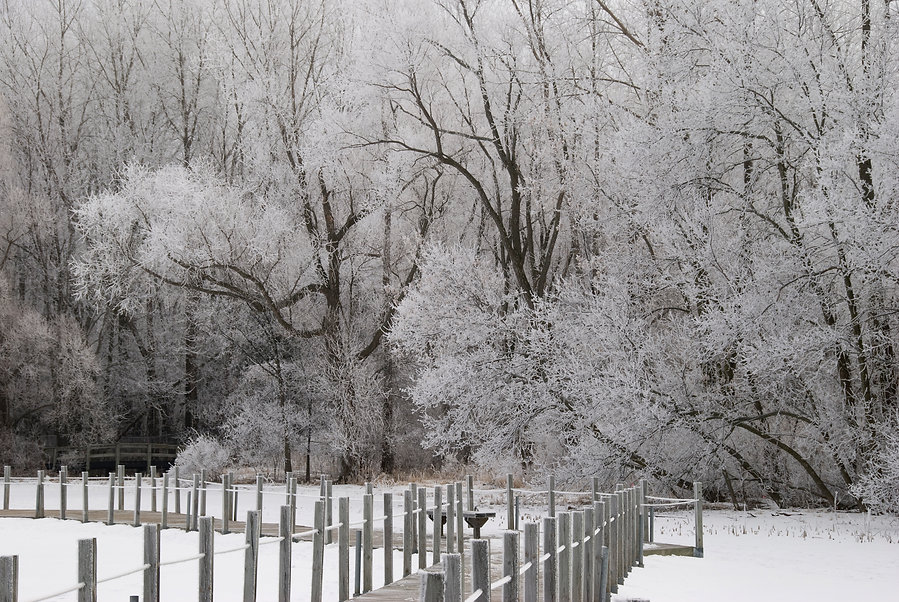Naimul Karim Naim personal website photgraphy hoar white frost Maplewood Nature Center winter cold Minnesota nature frozen trees