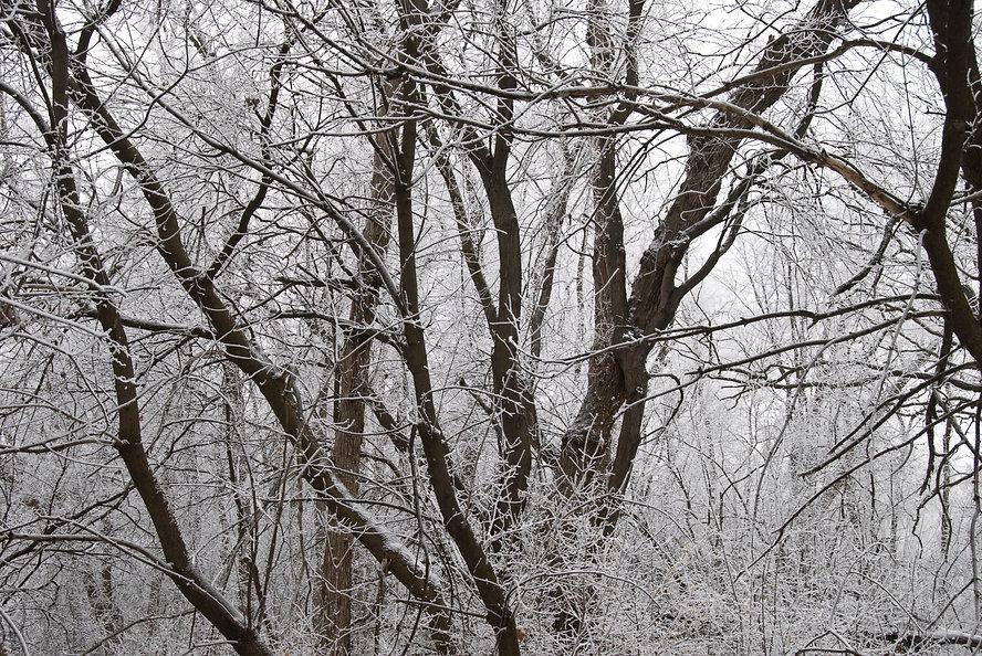 Naimul Karim Naim personal website photgraphy hoar white frost Battlecreek neighborhood park winter cold Minnesota nature white forest fairy tale spooky