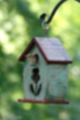 Naimul Karim Naim personal website photgraphy bacyard Wren songbird nest nestng peekaboo