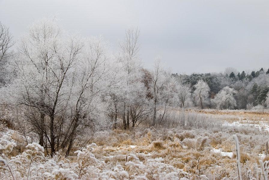 Naimul Karim Naim personal website photgraphy hoar white frost Battlecreek neighborhood park winter cold Minnesota nature white forest fairy tale