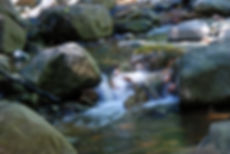 Naimul Karim Naim personal website photgraphy summer Minnesota nature forest creek green moss rock water tranquil shaded