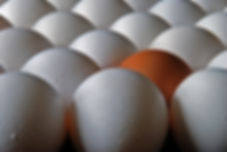 Naimul Karim Naim personal website photgraphy eggs close-up