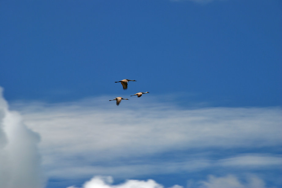 Naimul Karim Naim personal website photgraphy summer Minnesota nature Bemidji blue sky white cloud thee geese flying