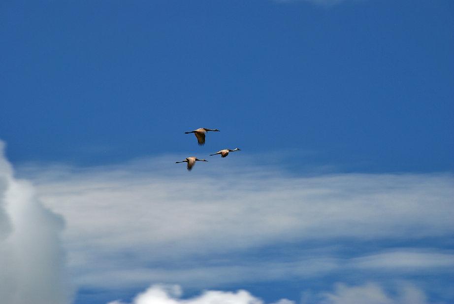 Naimul Karim Naim personal website photgraphy summer Minnesota nature Bemidji blue sky white cloud thee geese flying