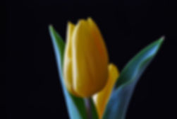Naimul Karim Naim personal website photgraphy yellow water drop on flower dew