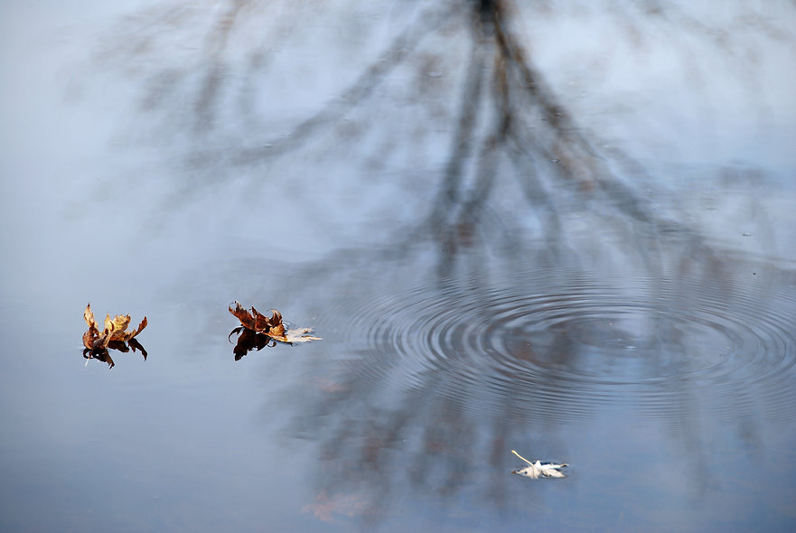 Naimul Karim Naim personal website photgraphy Minnesota fall autumn fallen leaves floating calm water St. Croix River Wild Rive State Park refection